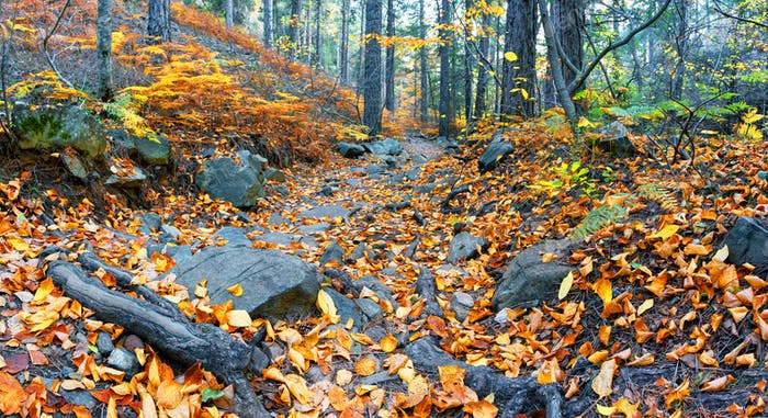 Rocky path strewn with leaves in autumn forest
