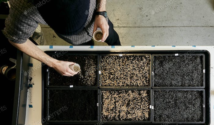 Person sowing seeds in shallow seed trays, view from above