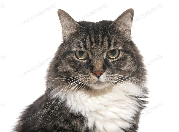 Porträt einer Katze Nahaufnahme.