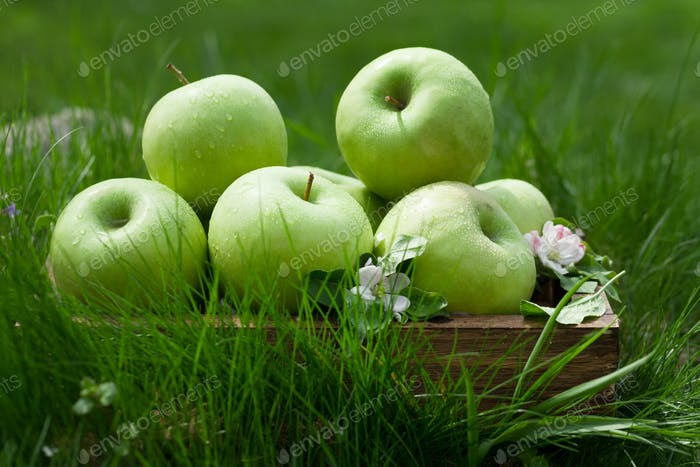Fresh garden apples in box