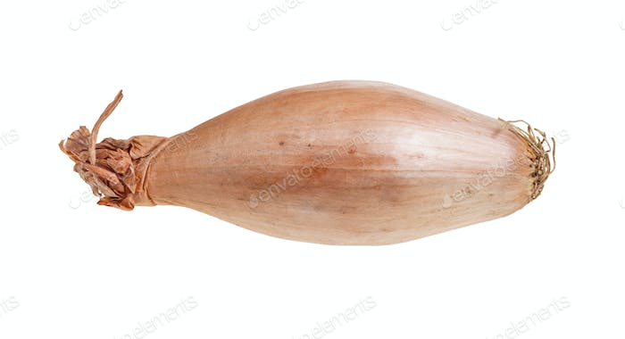 ripe bulb of shallot onion isolated on white