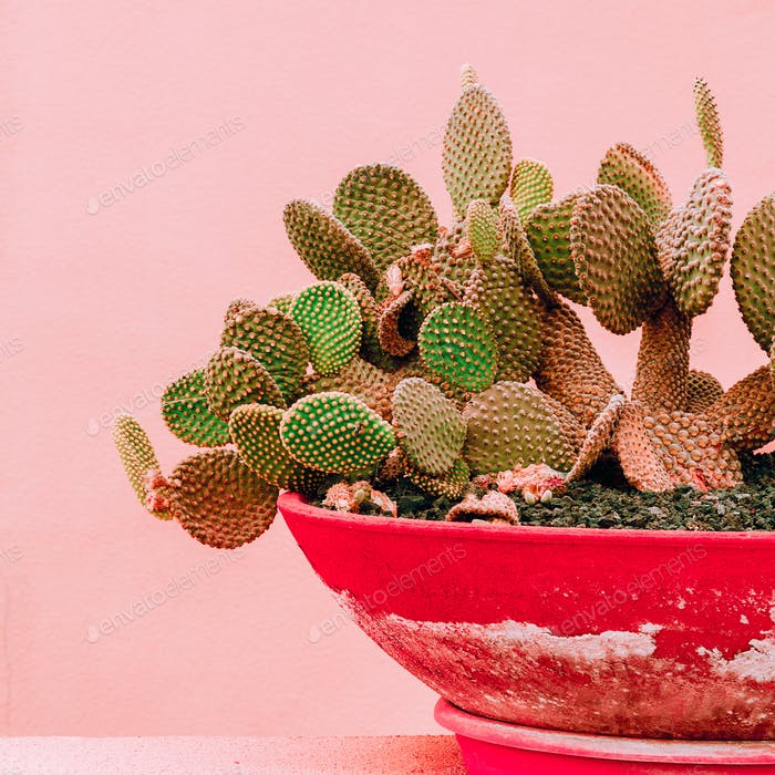 Plants on pink design concept. Cactus on pink background wall