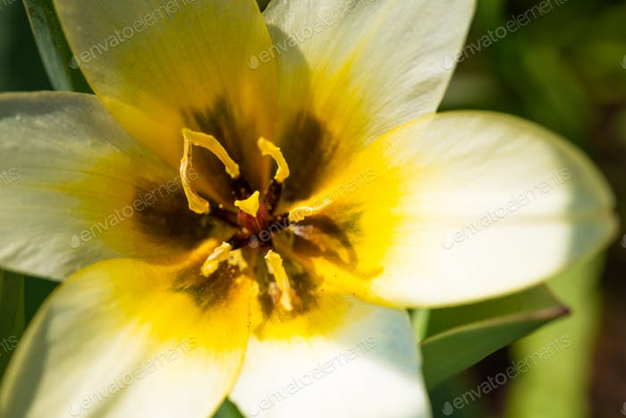Close up white yellow flower, soft focus
