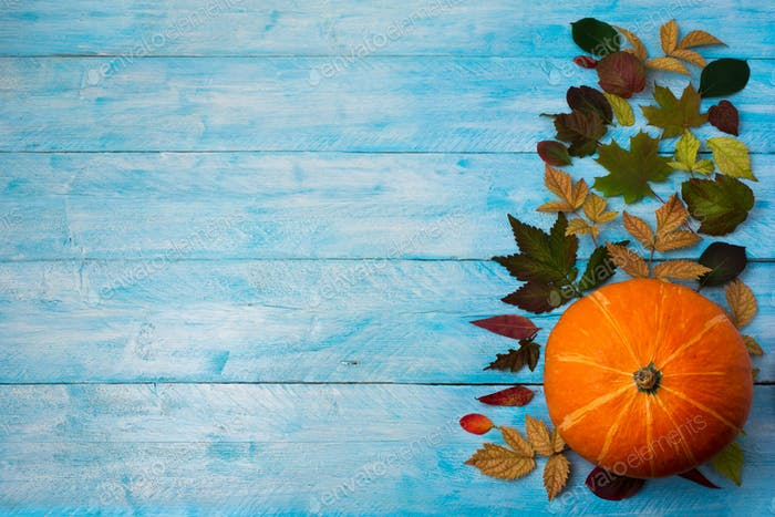 Thanksgiving background with leaves and orange squash on blue