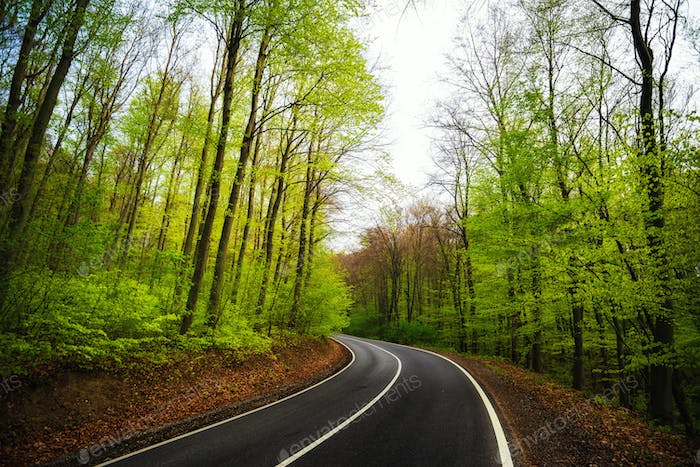 Asphalt road curve in the green forest