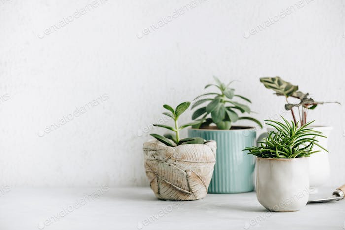 Collection of various cactus and succulent plants in different pots