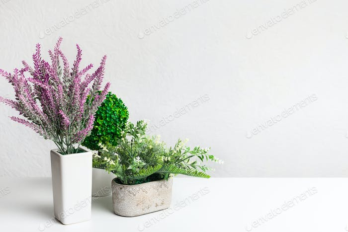 Decorative houseplants and lavender in pots over wall