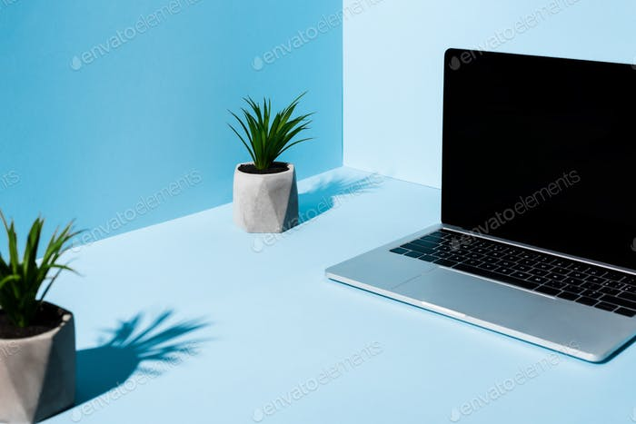 Selective Focus of Modern Laptop Near Green Plants on Blue Background