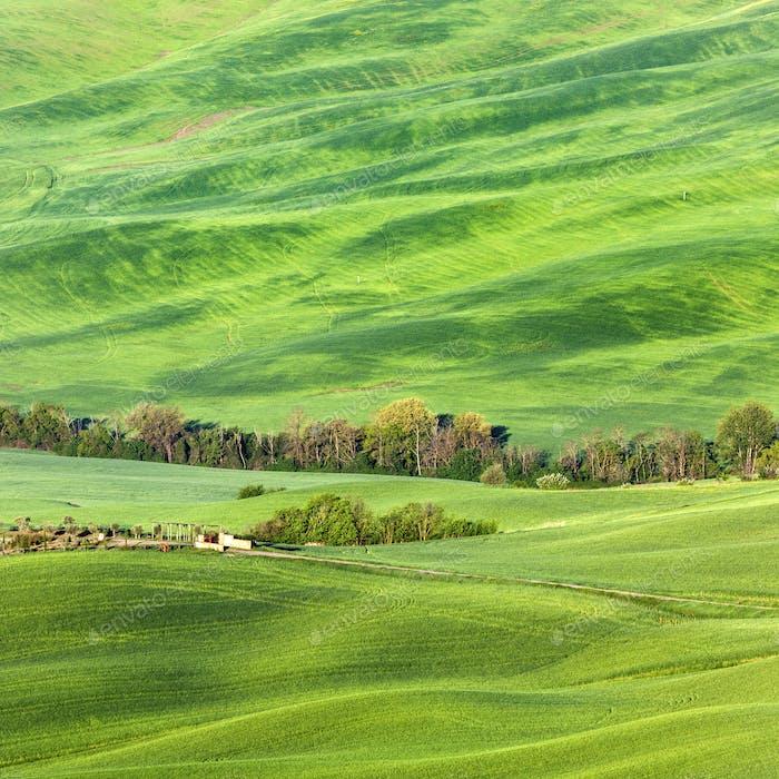 Tuscany landscape during spring