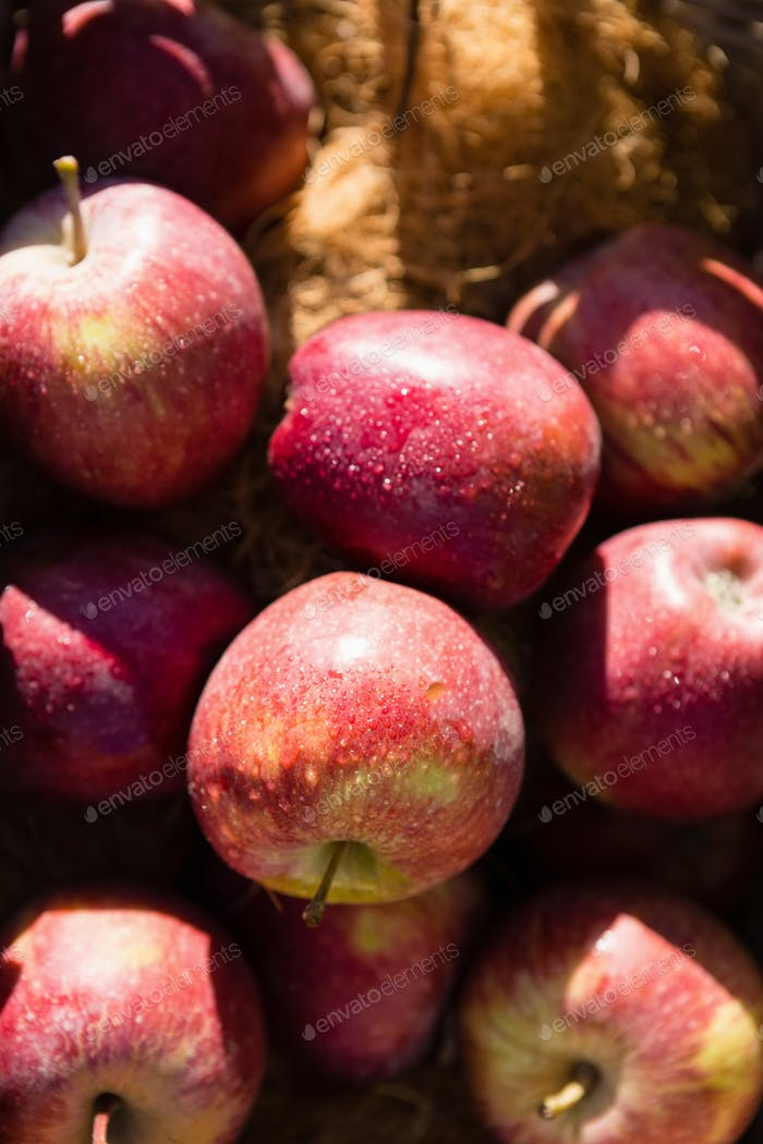 Close-up of fresh apple