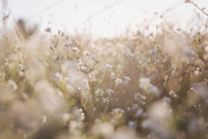 Idyllische Sommerwiese