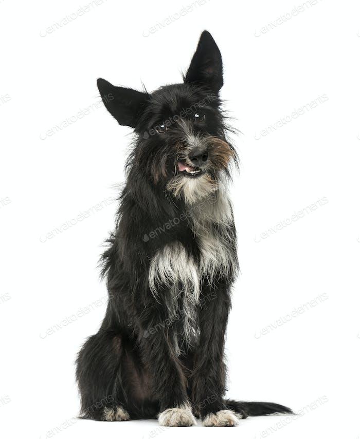 Mixed breed dog sitting, 1 year old, isolated on white