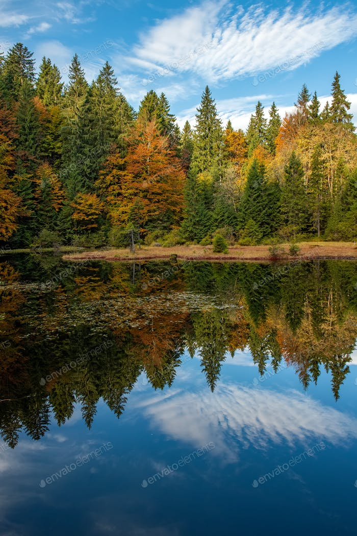 Forest lake in autumn colorful foliage