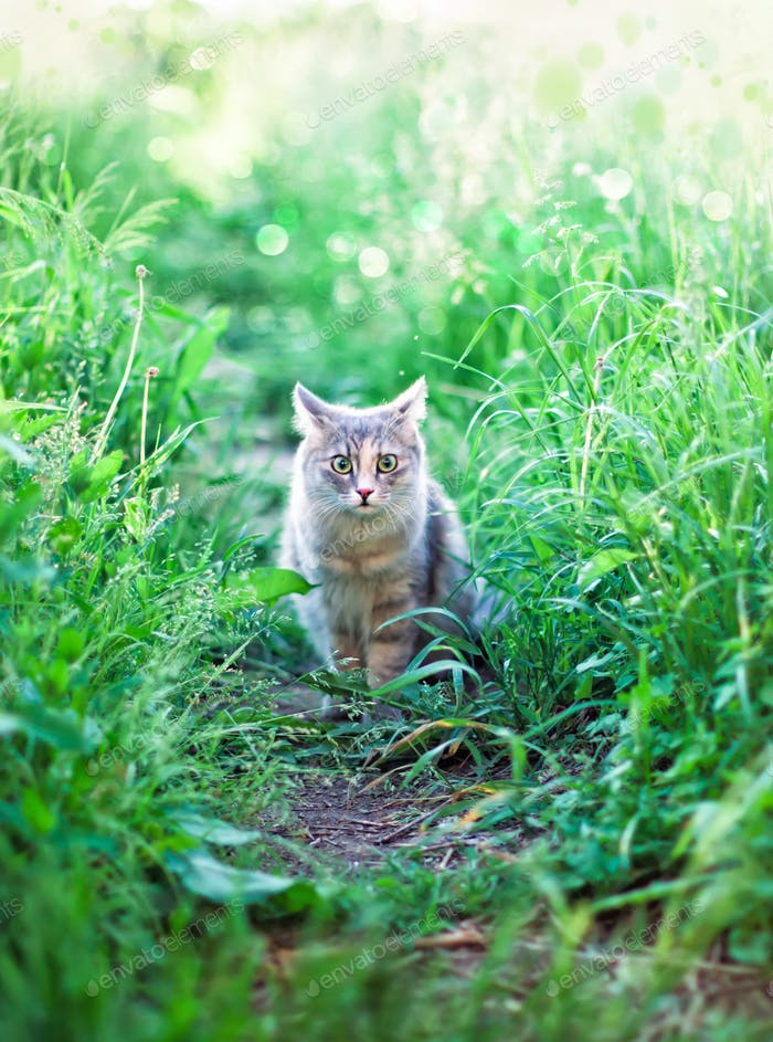 grey kitten sitting in the grass with fear