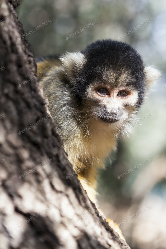 Monkey Close-up