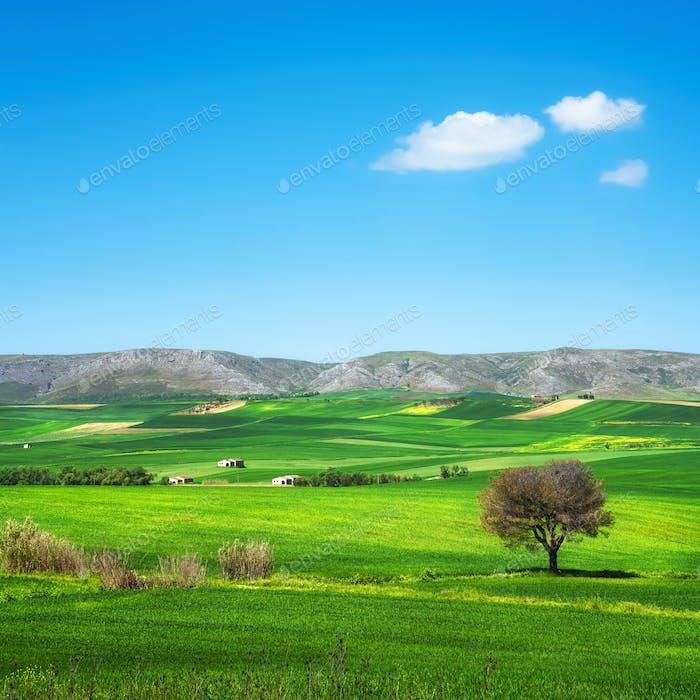 Apulien Landschaft Blick auf sanfte Hügellandschaft. Murge Poggiorsini, Italien