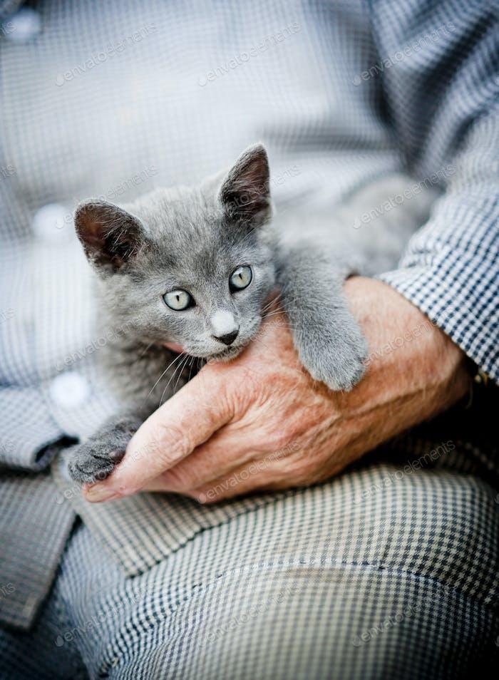 Thumbnail for Cute kitten