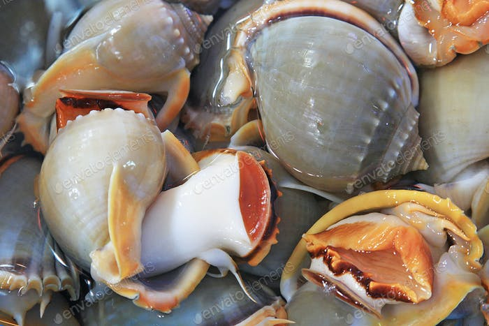Molluscs Of The Gulf Of Thailand