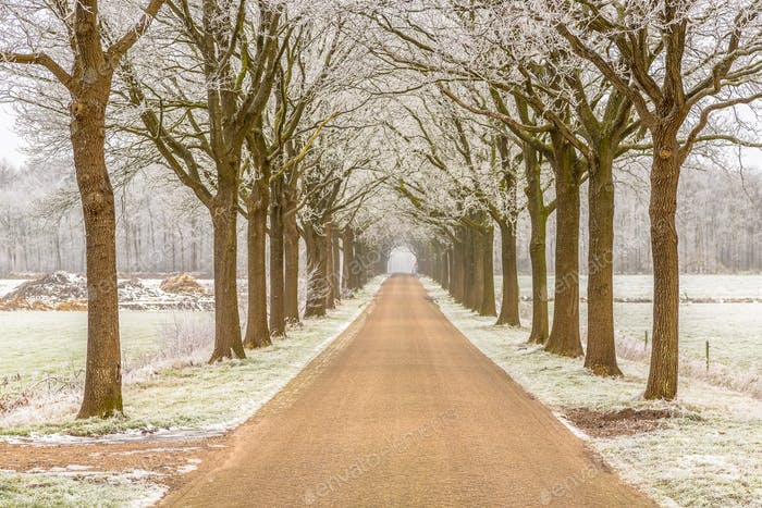 Frosty winter road in Friesland