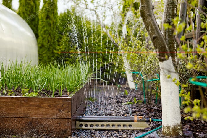 Green onions grow in a special garden box. Onion bed during watering, place for text