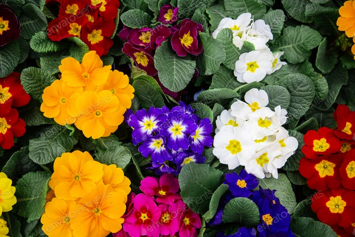 Bright background with lots of floral texture.