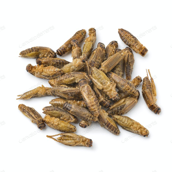 Heap of crispy small crickets