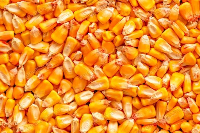 Corn seed kernels heap