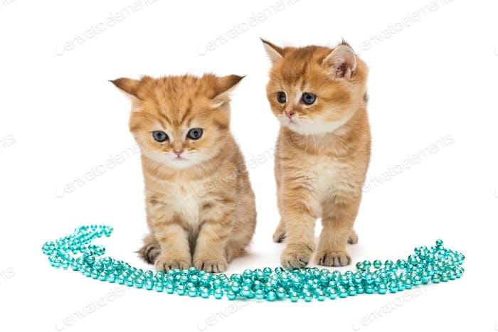 Zwei kleine Ingwer-Kätzchen und Weihnachtsdekorationen