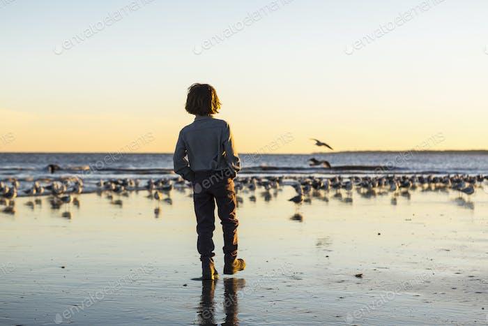 6 year old boy and seagulls, St. Simon's Island, Georgia
