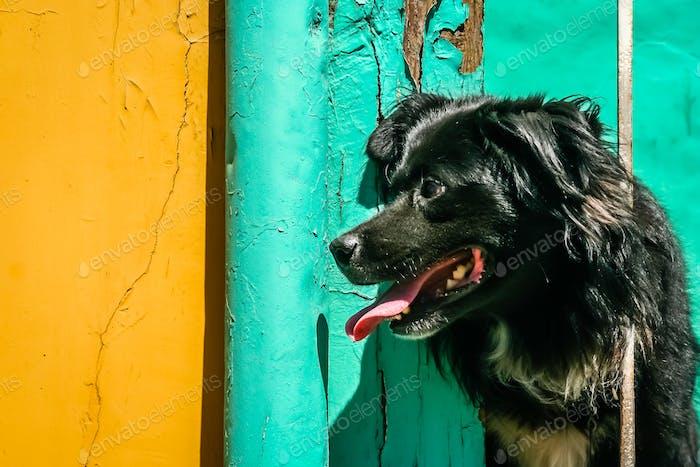 Black dog on the balcony
