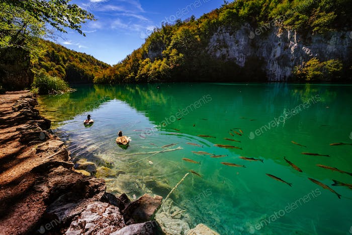 Crystal clear water with fish - Plitvice Lakes National Park - Plitvice Jezara, Croatia