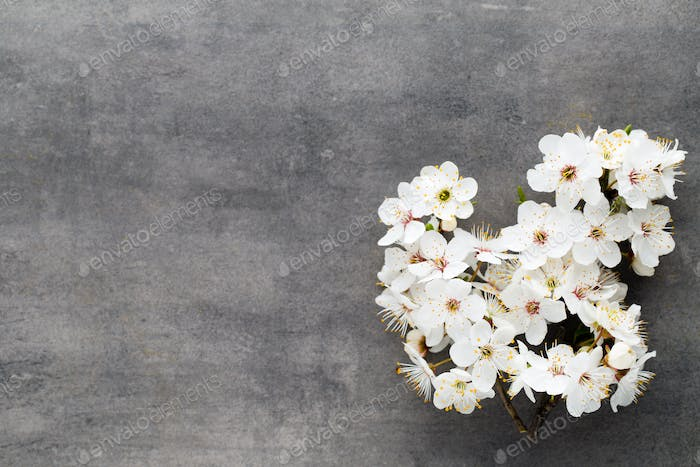 Spring cherry blossom on the gray background.