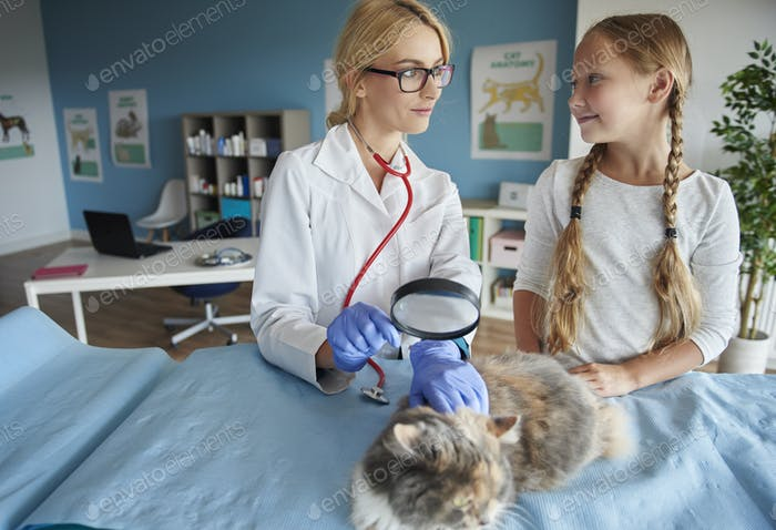 Cat examination with a magnifying glass