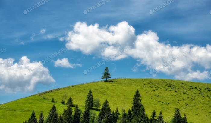 Alone pine tree on the green hill and blue sky with clouds