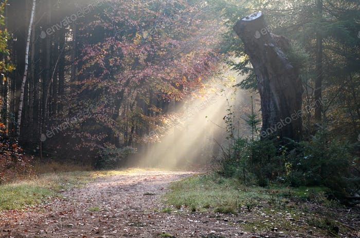 sunbeam over path in autumn forest