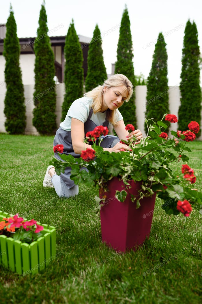Happy woman in apron works with flowers in garden