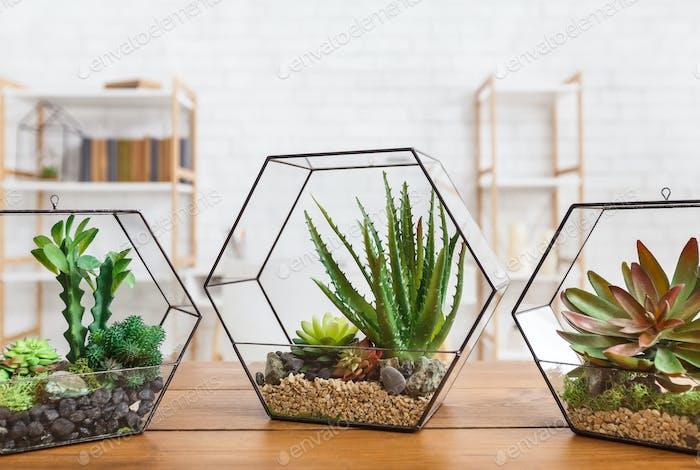Succulent plants in florarium vases on table