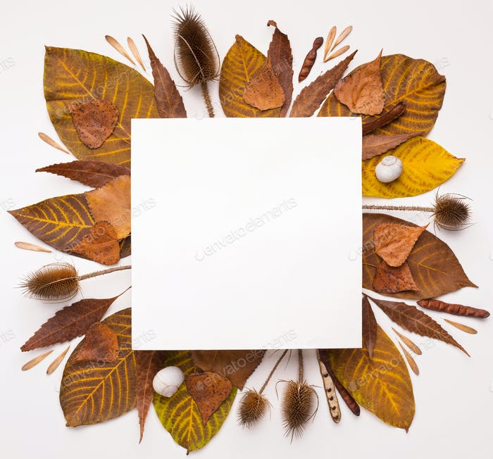 Autumn Herbarium of fallen leaves making square frame