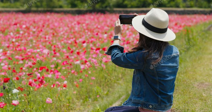 Woman take photo on cellphone in poppy flower garden