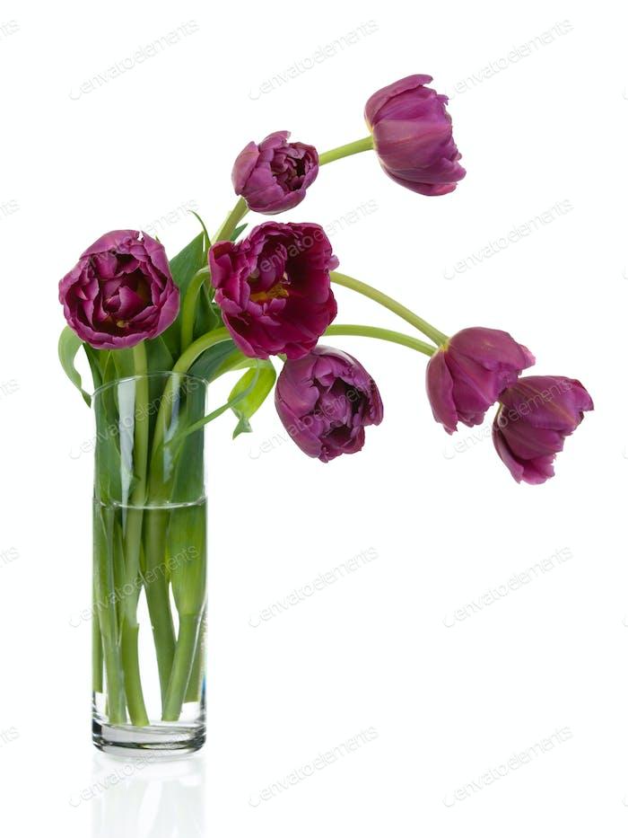 Tulpen Blumenstrauß in Glasvase voller Größe