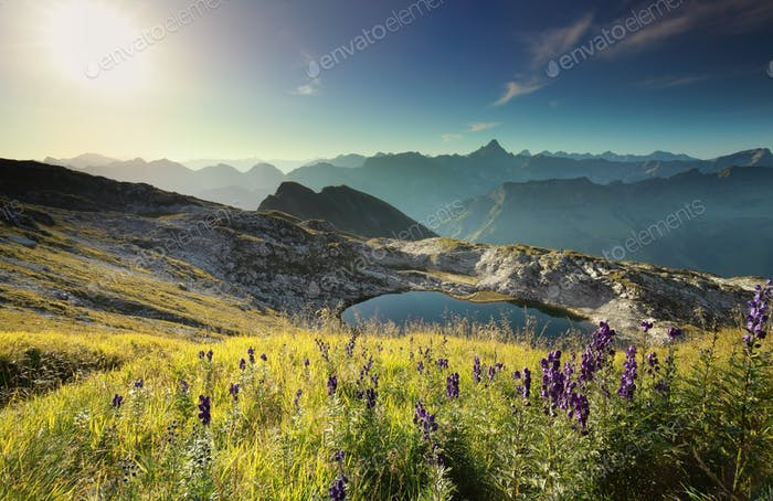 wildflowers on hill by alpine lake at sunrise