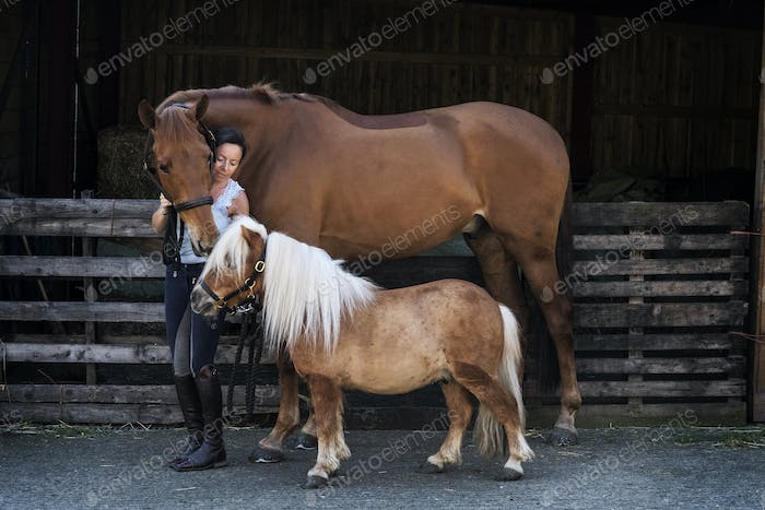 Woman standing outside stable, holding brown horse and a Shetland  pony by their bridles.