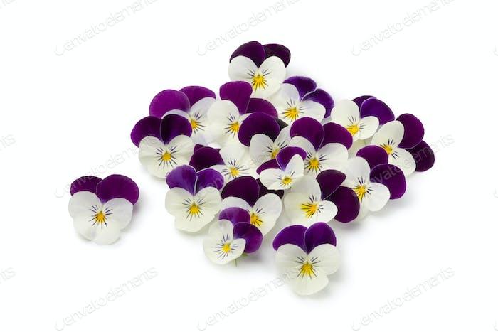 Fresh picked viola flowers