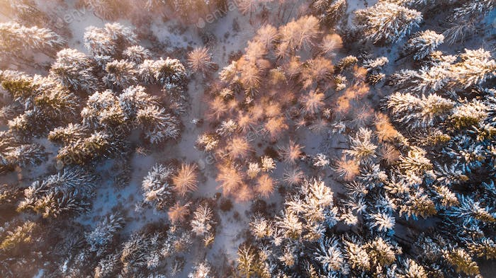 Beautiful Sunlight in Winter Wonderland. Trees Covered in Snow. Top Down View