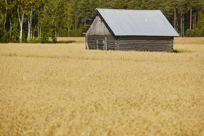Traditional finnish wooden farm in the countryside. Finland landscape. Horizontal