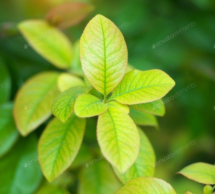 Spring leaf nature.