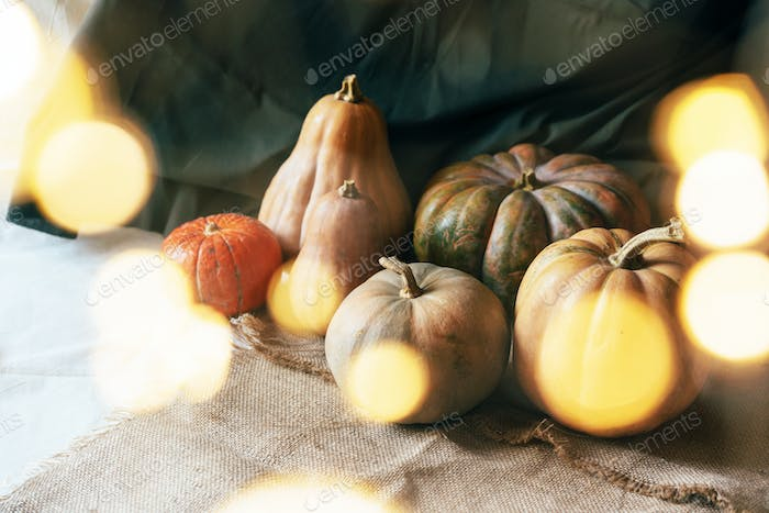 Large variety of pumpkins and bokeh from lanterns.