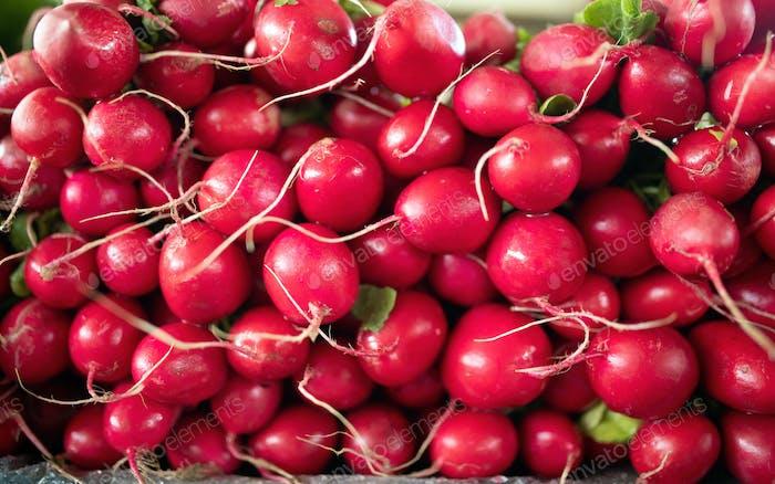 Freshly harvested, purple colorful radish. Growing radish. Growing vegetables