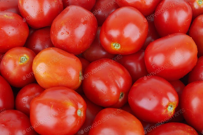 field tomatoes close-up as a background
