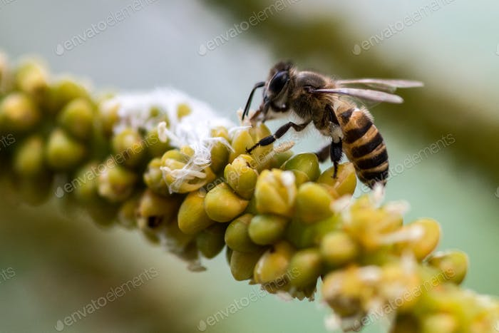 Bee on Yellow Flowers Palm Tree Collecting Pollen